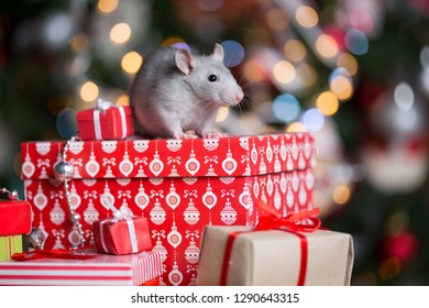 Gray rat with gifts on the background of the Christmas tree in the lights, the symbol of the new year