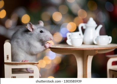 Gray rat symbol of the new year on the background of lights, The rat is sitting at a table with a tea set.
