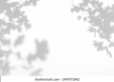 Gray shadow of the hawthorn tree leaves on a white wall. Abstract neutral nature concept blurred background. Space for text. Overlay effect for photo.