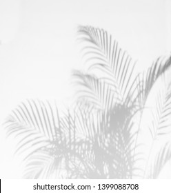 Gray shadow of palm leaves on palm tree abstract background   falling on white concrete wall