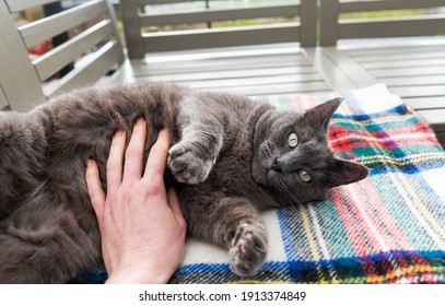 Gray Shorthaired Cat Enjoying Sunny Day Lounging on Outdoor Furniture