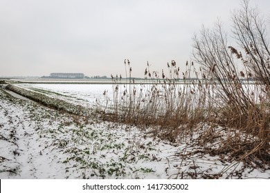 Gray snow sky above a snowy Dutch polder landscape in winter.In the foreground are dried brown reeds and branches of shrubs. The photo was taken in the neighbourhood of Drimmelen, North Brabant.