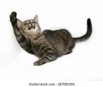 Gray striped cat playing on gray background