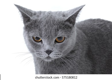 Gray striped kitten on a white background