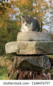 Gray striped, tabby cat lying on the stone elements in the country home garden.