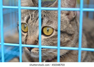 Gray tabby cat in cage