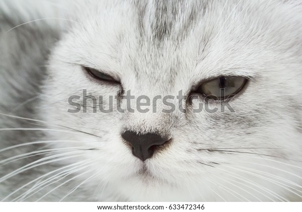 Gray tabby cat have an eye injured.