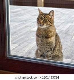 A gray tabby cat sits behind a glass door and waits for him to be allowed home. Pets concept.