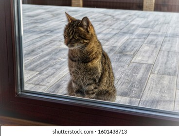 Gray tabby cat sits behind a glass door.