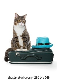 Gray tabby cat sitting on a green suitcase, isolated on white