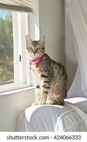 Gray Tabby Cat Sitting at Window
