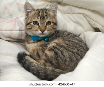 Gray Tabby Kitten Laying on Bed