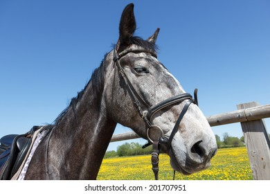 A gray tamed horse with dark eyes