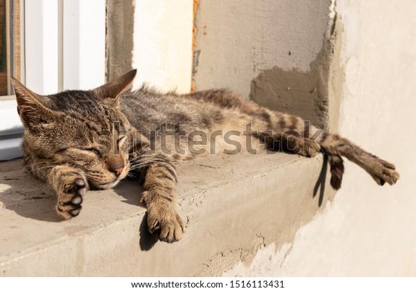 gray-thin-yard-cat-sleeps-600w-151611343