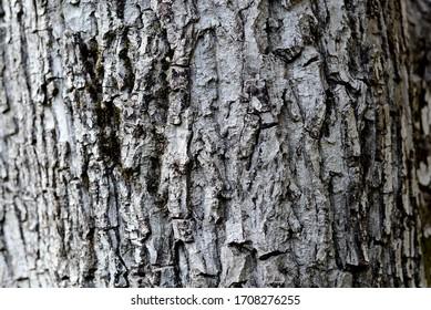 Gray tree bark texture closup