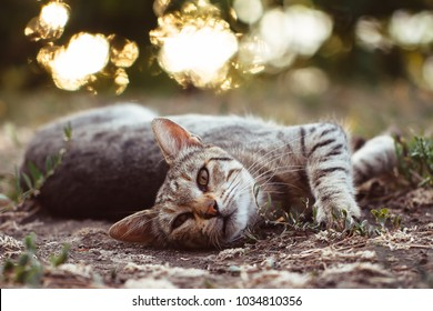 Gray and white cat lying on the ground