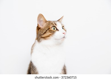 gray and white cat on a light background