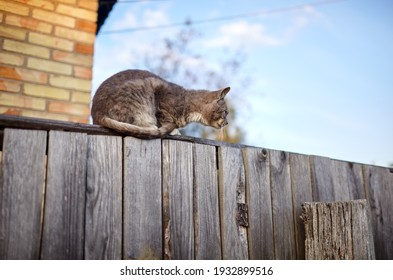 Gray and white cat sitting on the fence. Funny facial expression. Selective focus, blurred background