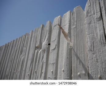 Gray and White Feather Stuck into a White Fence