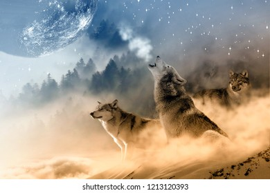 Gray Wolf, A typical pack is composed of an alpha male and an alpha female (the pack leaders), their pups, and several subordinate or juvenile wolves.