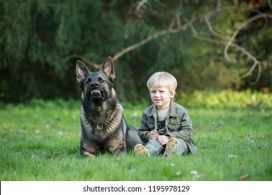 Gray working line German shepherd dog guarding human kid