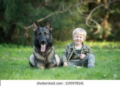 Gray working line German shepherd dog with human kid