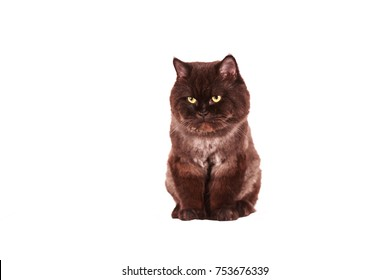 Gray-black cat on a white background
