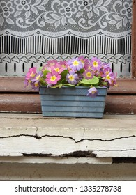 Gray-blue flower box with blossoming purple and pink flowers, green leaves foliage on broken and cracked exterior window sill against brown wooden window frame, embroidered white curtain background