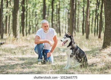 gray-haired man bearded dresher dog husky in the park, concept of friendship
