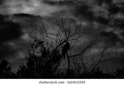 A grayscale shot of a bird sitting on a lonely tree under a gloomy sky