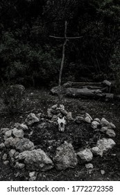 A grayscale shot of a goat skull on a dry tree branch in a dark forest