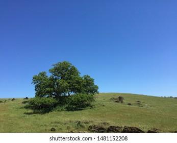 A grazing field near Stockton, California.