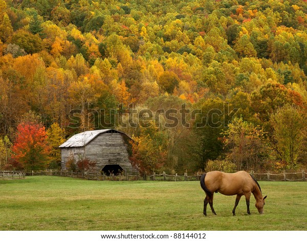 grazing horse in autumn