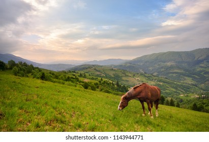 Grazing Horse. Beautiful Rural Mountain Landscape With A Red Horse Grazing On The Green Slope. Spring In Mountains, Border Of Romania And Ukraine.Horse Grazing Is Green Pasture On The Slopes