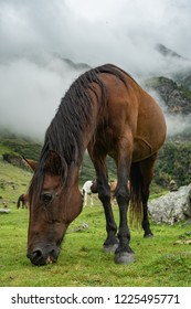 Grazing horse close to Hintersee in Austria