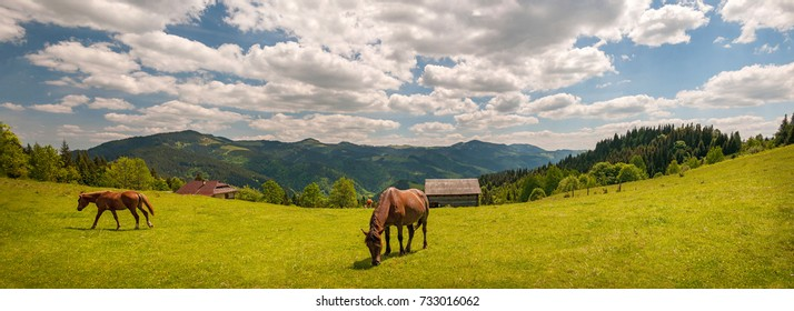 Grazing horse at high-land pasture at Carpathian Mountains in rays of sunset. Panorama of summer pasture on a background of mountains.