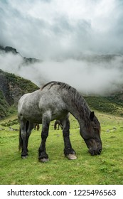 Grazing horse in mountains