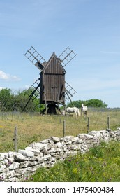Grazing horses by an old windmill at the island Oland in Sweden, the island of sun and wind