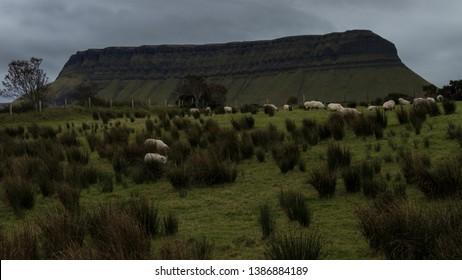 Grazing sheep at the feet of Benbulben,part of Dartry mountain range , Sligo , Ireland