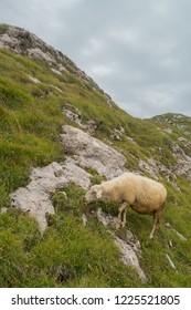 Grazing sheep in the mountains