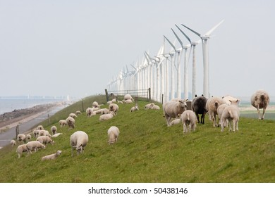 Grazing sheep near windmills along a dike in the netherlands