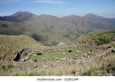 Grazing Sheeps in the Andes mountains