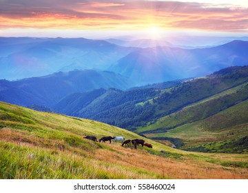 Grazing wild horses on the slopes of the mountain peaks in the morning  evening, on a hot summer day. Shepherds herd of Ukrainian Hutsul released into the mountains without a guard to fall