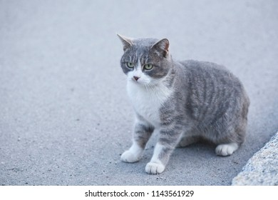 Gre cat sitting on the road