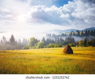 Great alpine highlands in sunny day. Location Carpathian mountains, Ukraine, Europe. Picture of a rustic area. Scenic image of hiking concept. Attractive summer landscape. Explore the beauty of earth.