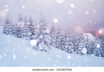 Great background. Carpathian mountains at winter time. Landscape of the beautiful woods.