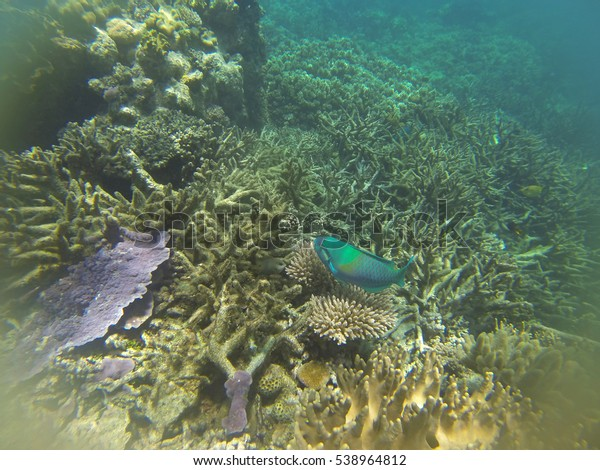 Great Barrier Reef After Major Coral Stock Photo Edit Now