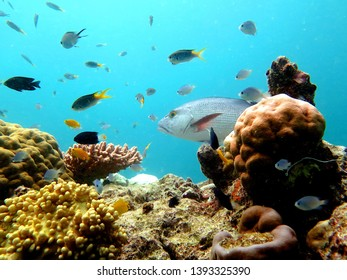 Great Barrier Reef, Outer Reef, Cairns, Queensland, Australia