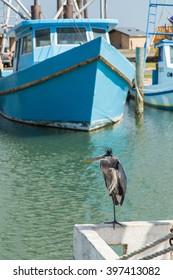 Great Blue Heron (Ardea herodias) perched on boat transom with fishing fleet in background; Fulton Harbor, Texas Gulf Coast.