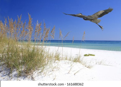A Great Blue Heron Flying Over a Beautiful White Sand Beach
